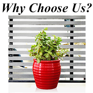 Rolling Nature, Plants Online, Green Gifting, Indoor plant, Gifts, Eco friendly, Plants, Live, Diwali