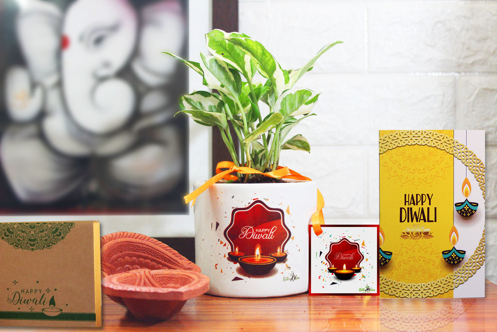 Rolling Nature Diwali Gift Combo of Air Purifying Good Luck N'joy Money Plant Plant in White Barrel Happy Diwali Divine Ceramic Pot