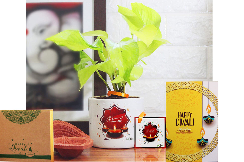 Rolling Nature Diwali Gift Combo of Air Purifying Good Luck Golden Pothos Plant in White Barrel Happy Diwali Divine Ceramic Pot
