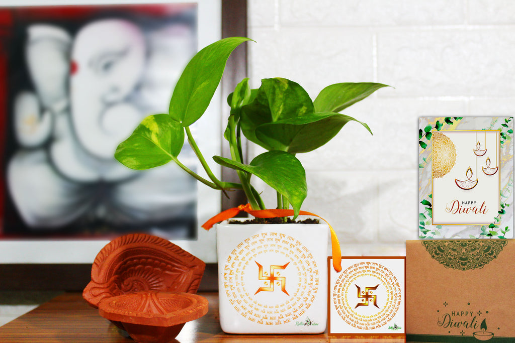 Rolling Nature Air Purifying Good Luck Money Plant in White Square Shubh Labh Divine Ceramic Pot