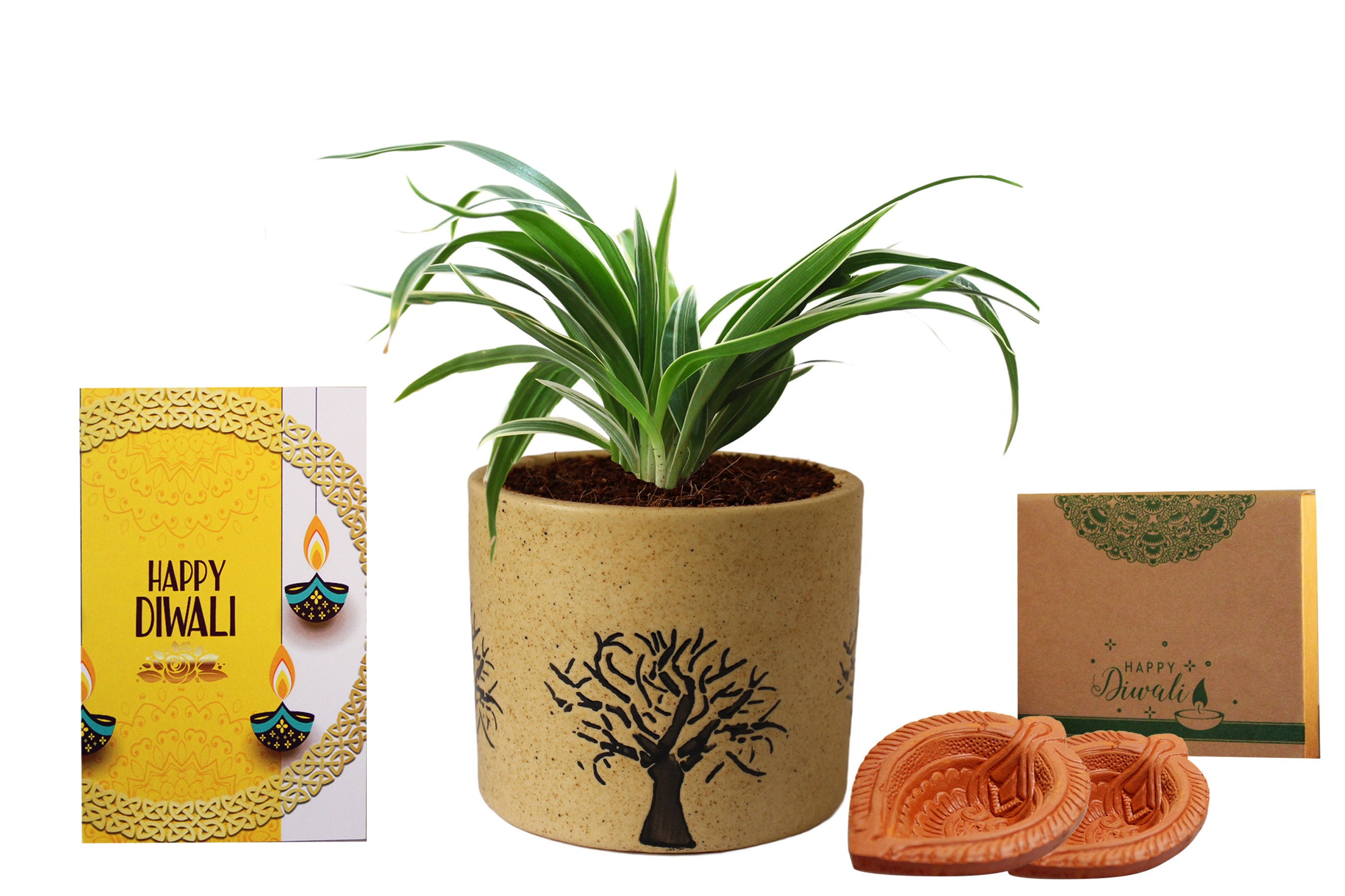 Rolling Nature Diwali Gift Combo of Air Purifying Spider Plant in Brown Barrel Ceramic Aroez Pot