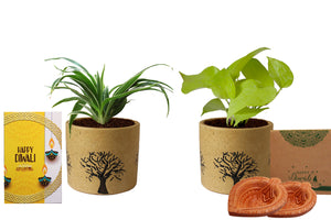 Rolling Nature Diwali Gift Combo of Air Purifying Live Spider and Golden Pothos Plant in Brown Barrel Aroez Ceramic Pot