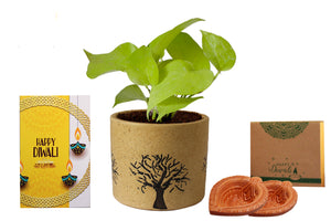 Rolling Nature Diwali Gift Combo of Air Purifying Good Luck Live Golden Money Plant in Brown Barrel Aroez Ceramic Pot