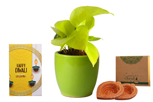 Rolling Nature Diwali Gift Combo of Good Luck Air Purifying Golden Money Plant in Green Pear Ceramic Pot