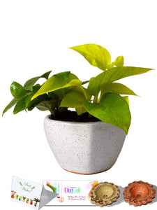 Rolling Nature Diwali Gift Combo of Good Luck Air Purifying Money Plants Duet in White Heart Ceramic Pot