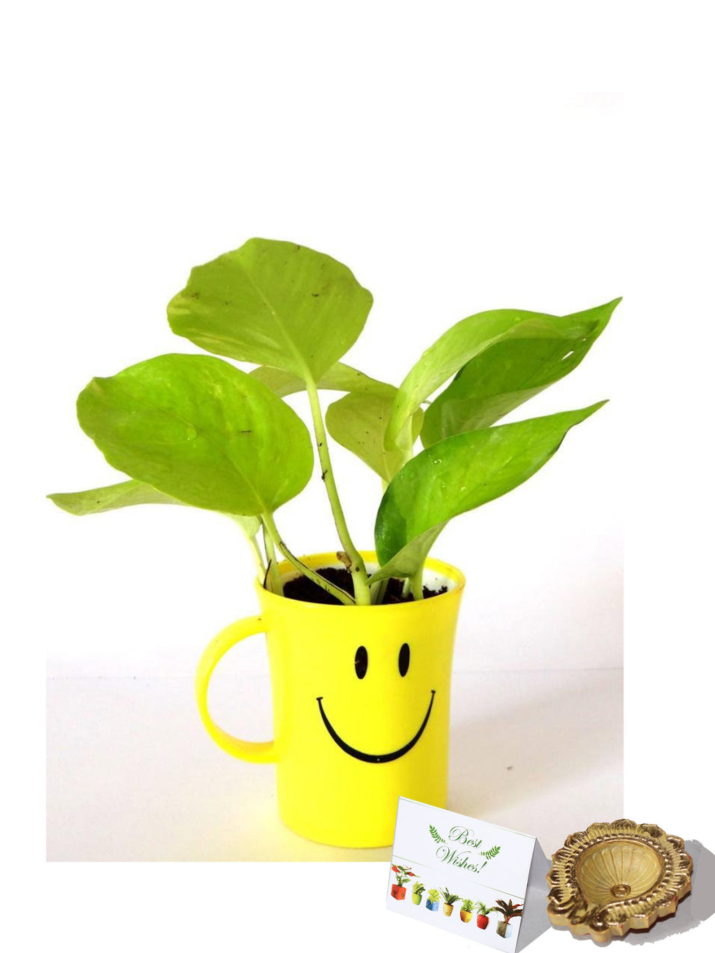Rolling Nature Diwali Gift Combo of Good Luck Air Purifying Golden Pothos In Smiley Cup