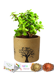 Rolling Nature Diwali Gift Combo of Good Luck Jade Plant In Brown Barrel Aroez Ceramic Pot
