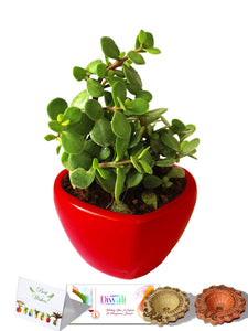 Rolling Nature Diwali Gift Combo of Good Luck Jade Plant in Red Heart Ceramic Pot