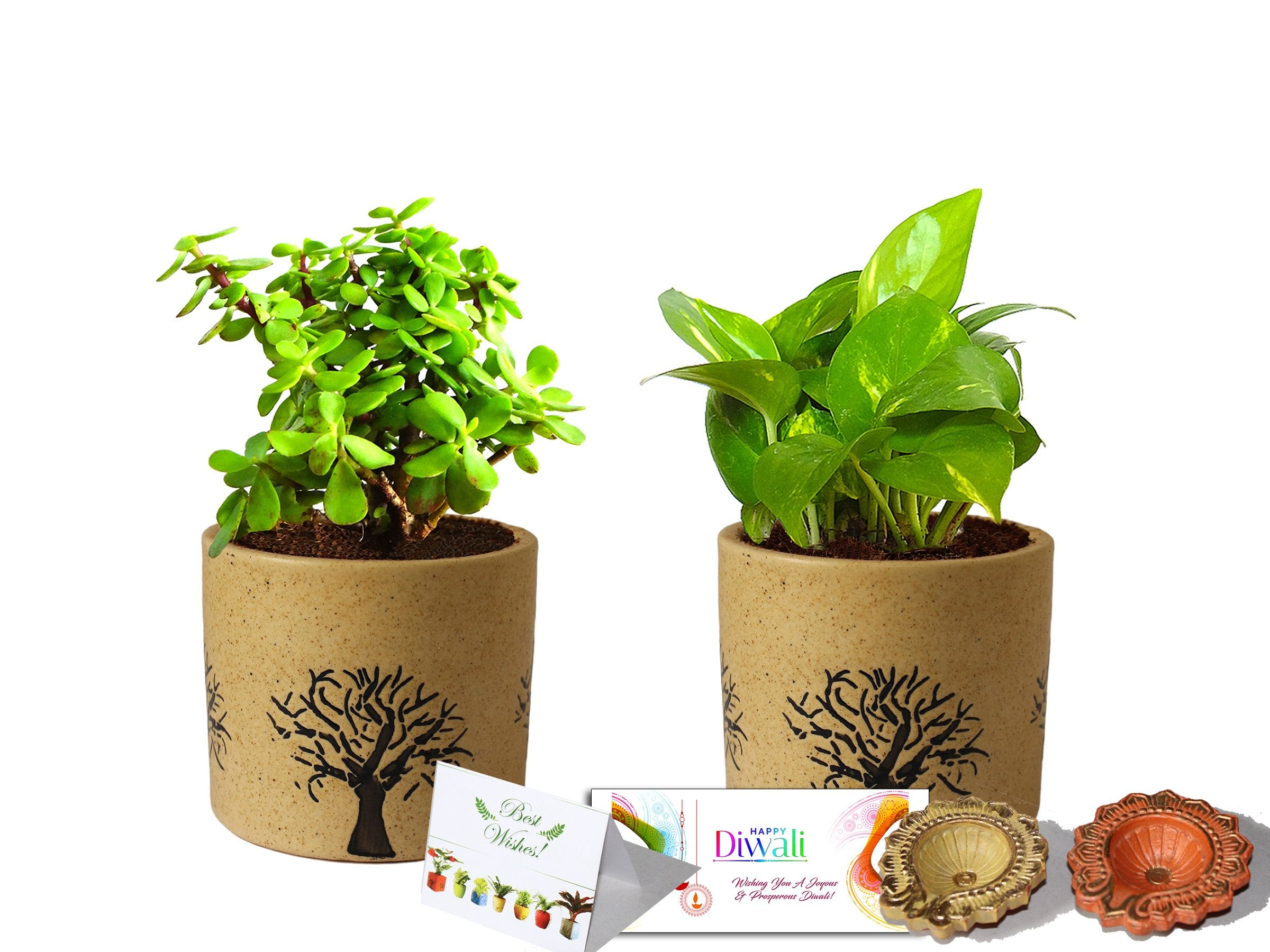 Rolling Nature Diwali Gift Combo of Good Luck Air Purifying Live Money Plant and Jade in Brown Barrel Ceramic Aroez Pot