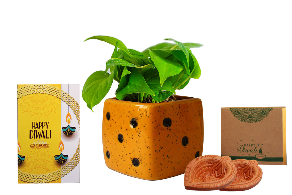 Rolling Nature Diwali Gift Combo of Good Luck Air Purifying Money Plant in Yellow Dice Ceramic Pot