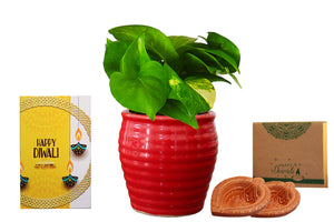 Rolling Nature Diwali Gift Combo of Good Luck Air Purifying  Money Plant in Red Ceramic Pot