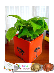 Rolling Nature Diwali Gift Combo of Good Luck Money Plant in Orange Cube Aroez Ceramic Pot
