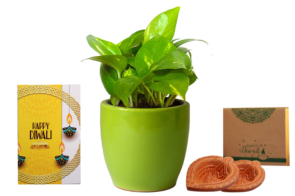Rolling Nature Diwali Gift Combo of Good Luck Air Purifying Money Plant in Green Pear Ceramic Pot