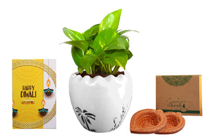 Rolling Nature Diwali Gift Combo of Good Luck Air Purifying Live Money Plant White Ruffel Aroez Ceramic Pot
