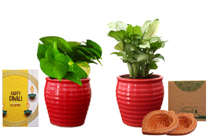 Rolling Nature Diwali Gift Combo of Good Luck Air Purifying  Money Plant and Green Syngonium in Red Ceramic Pot