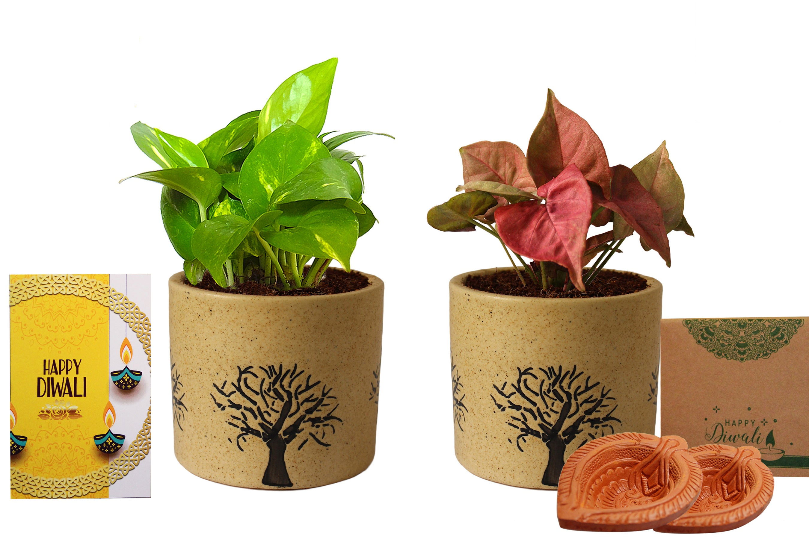 Rolling Nature Diwali Gift Combo of Good Luck Air Purifying Live Money Plant and Pink Syngonium in Brown Barrel Aroez Ceramic Pot