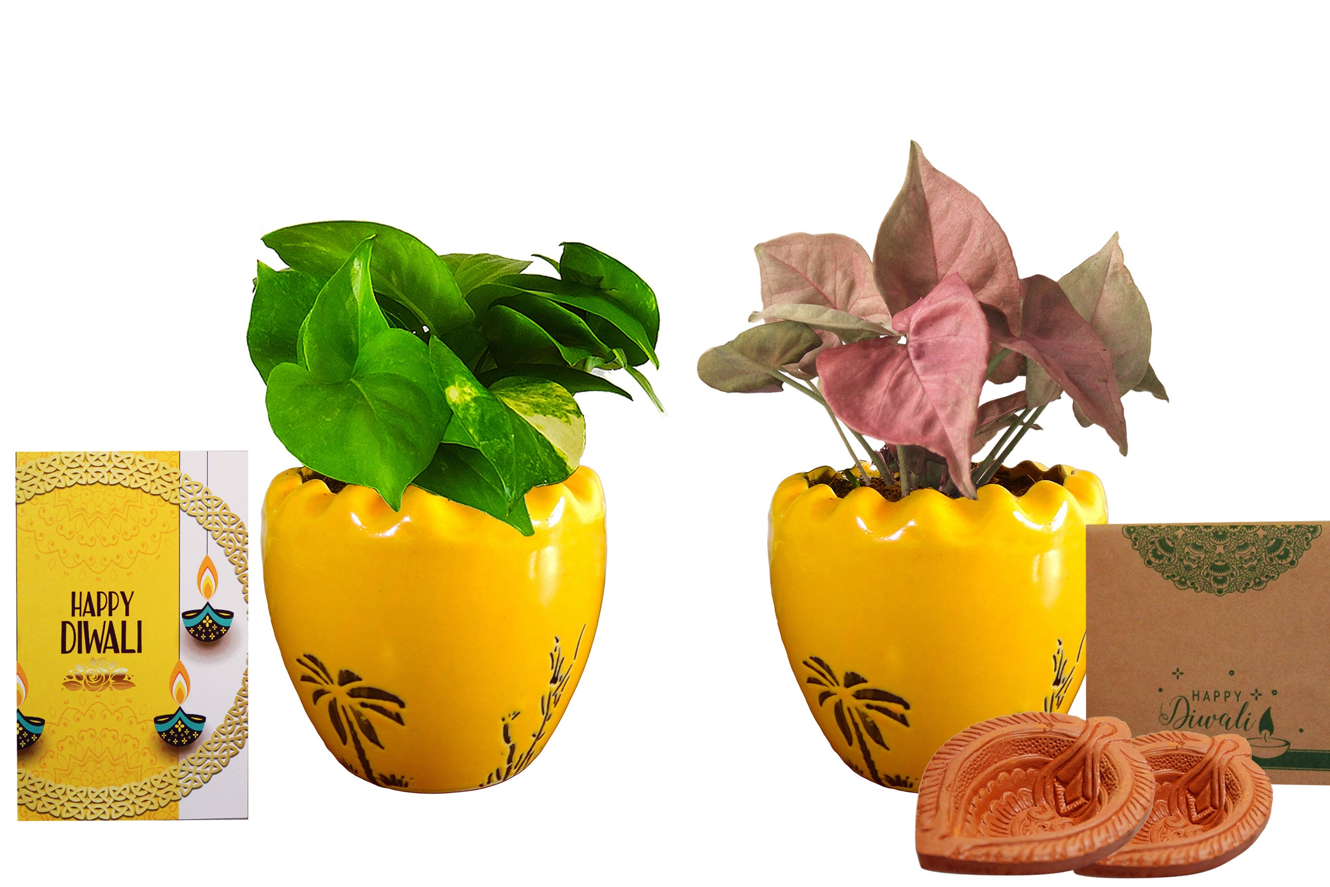 Rolling Nature Diwali Gift Combo of Good Luck Air Purifying Live Money Plant and Pink Syngonium in Yellow Ruffel Aroez Ceramic Pot