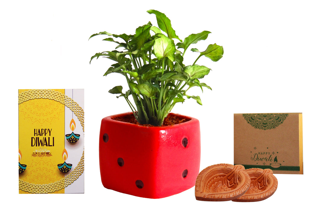 Rolling Nature Diwali Gift Combo of Good Luck Air Purifying Green Syngonium Plant in Red Dice Ceramic Pot