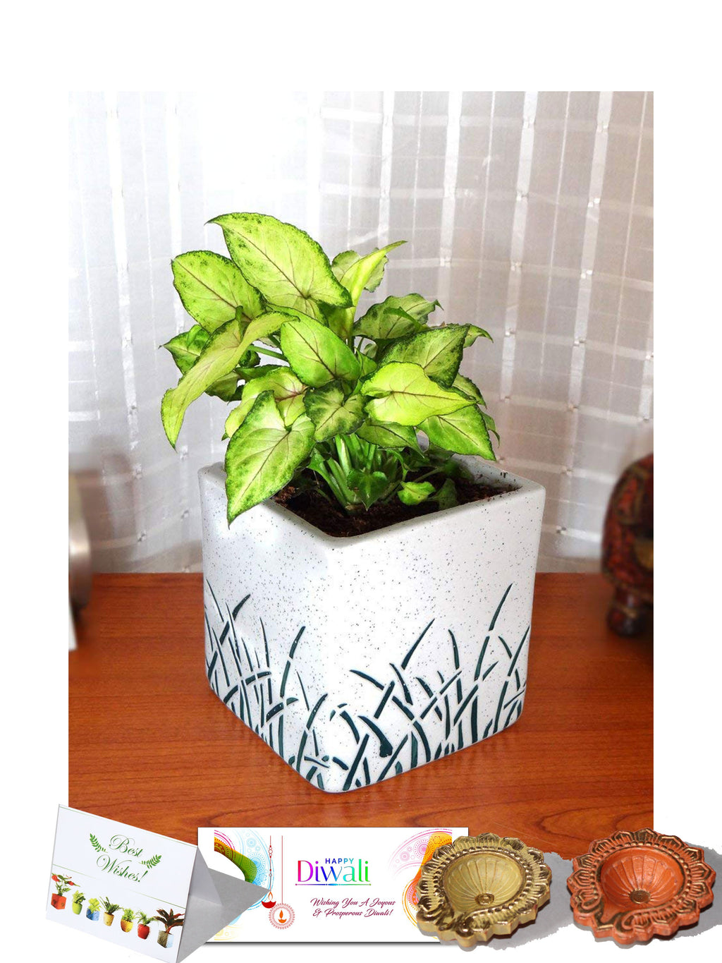 Rolling Nature Diwali Gift Combo of Good Luck Green Syngonium in White Cube Aroez Ceramic Pot