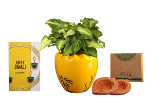 Rolling Nature Diwali Gift Combo of Good Luck Air Purifying Live Green Syngonium Plant in Yellow Ruffel Aroez Ceramic Pot