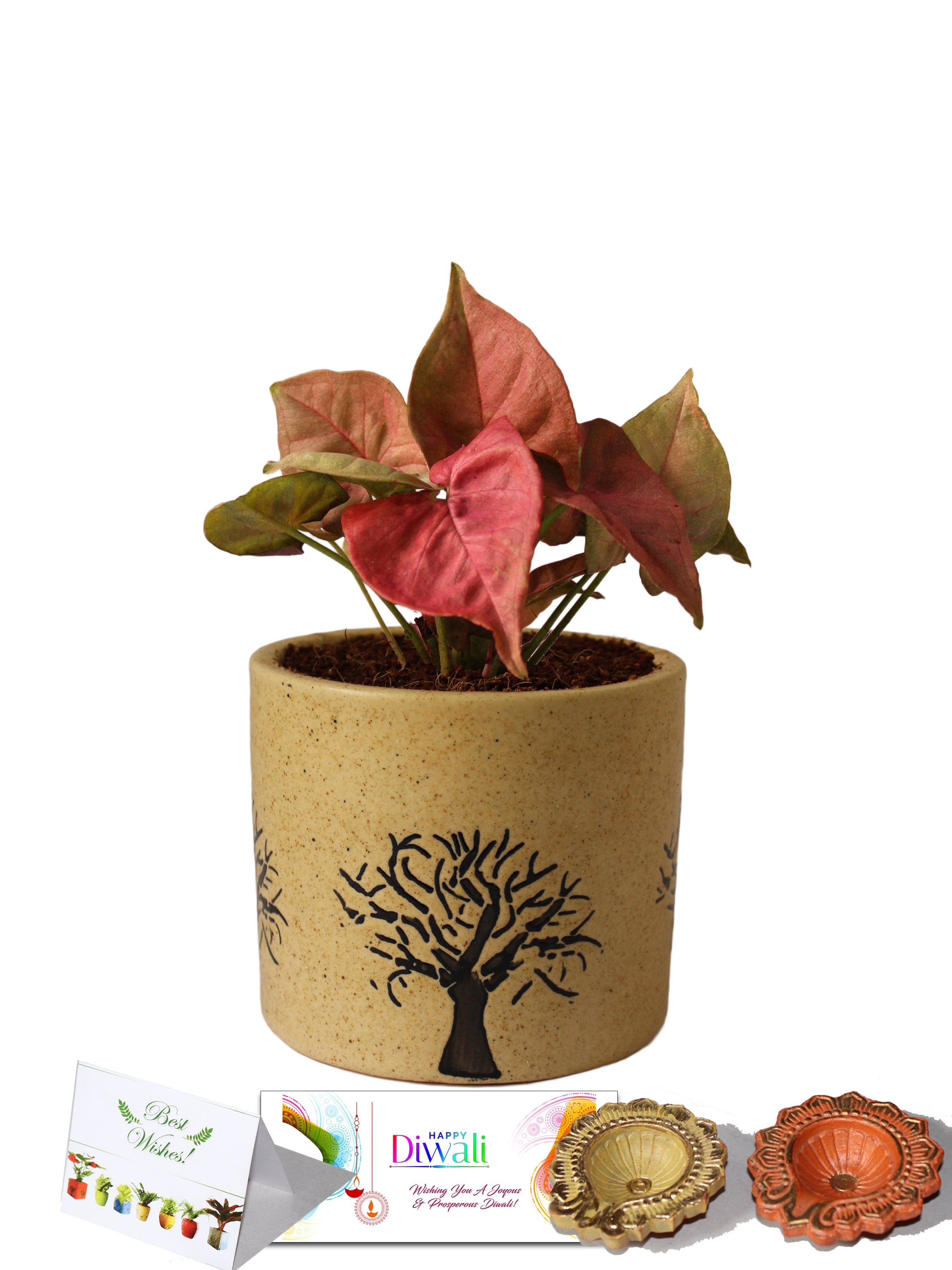Rolling Nature Diwali Gift Combo of Good Luck Pink Syngonium Plant in Brown Barrel Aroez Ceramic Pot