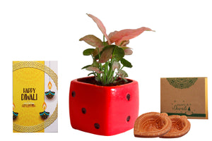 Rolling Nature Diwali Gift Combo of Good Luck Air Purifying Pink Syngonium Plant in Red Dice Ceramic Pot