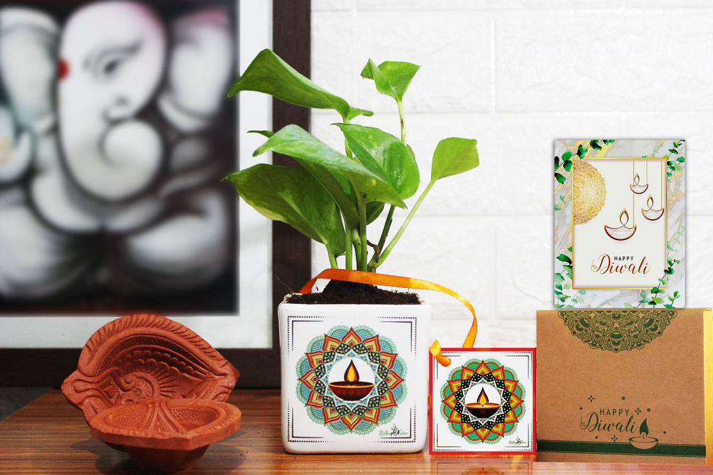 Rolling Nature Good Luck Jade Plant in White Square Mandala Divine Ceramic Pot