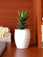 Aloe Juvenna Succulent Plant in White Ceramic Pot