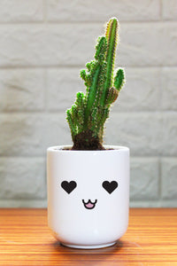 Cactus Plants in ceramic pots