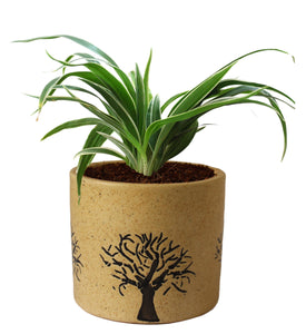 Rolling Nature Air Purifying Live Spider Plant in Brown Barrel Aroez Ceramic Pot