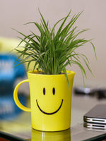 Air Purifying Spider Plant in Smiley Cup