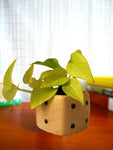 Good Luck Air Purifying Golden Money Plant in Brown Dice Ceramic Pot