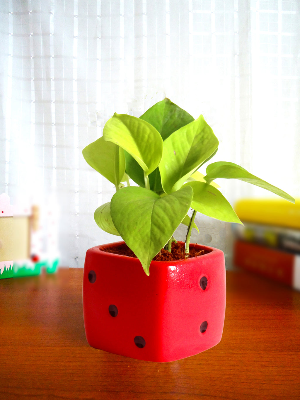 Good Luck Air Purifying Golden Money Plant in Red Dice Ceramic Pot