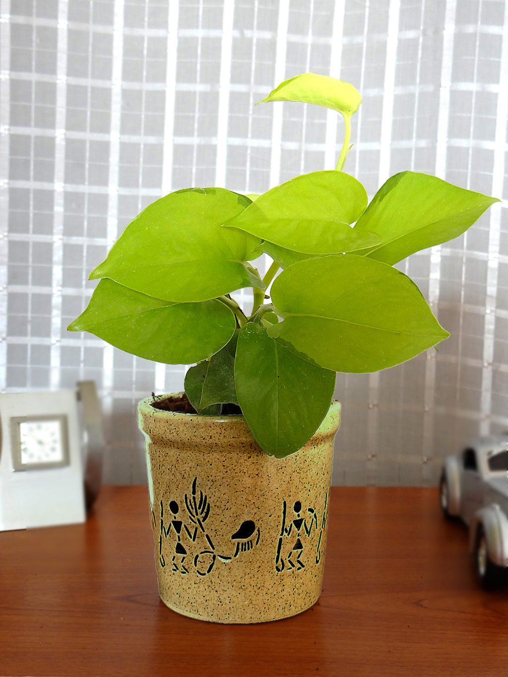 Good Luck Golden Money Plant in Brown Jar Aroez Ceramic Pot