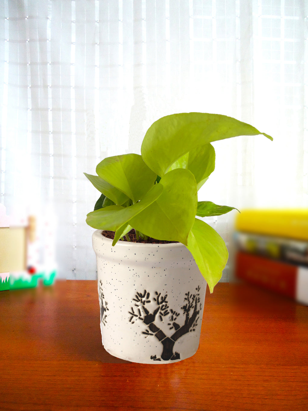 Good Luck Air Purifying Live Golden Money Plant in White Jar Aroez Ceramic Pot