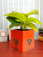 Good Luck Golden Money Plant in Orange Cube Aroez Ceramic Pot
