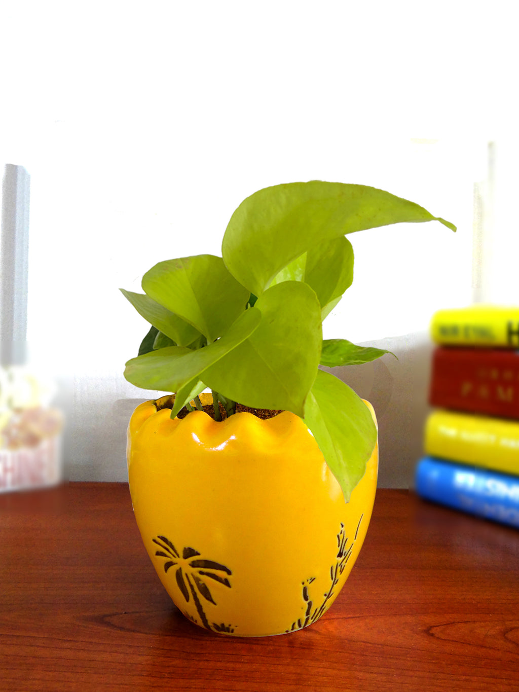 Good Luck Air Purifying Live Golden Money Plant in Yellow Ruffel Aroez Ceramic Pot
