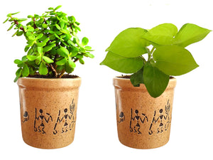 Combo Of Good Luck Live Golden Money Plant and Jade Plant in Brown Jar Aroez Ceramic Pot