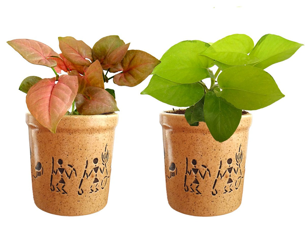 Combo Of Good Luck Air Purifying Live Golden Money Plant and Syngonium Pink Plant in Brown Jar Aroez Ceramic Pot