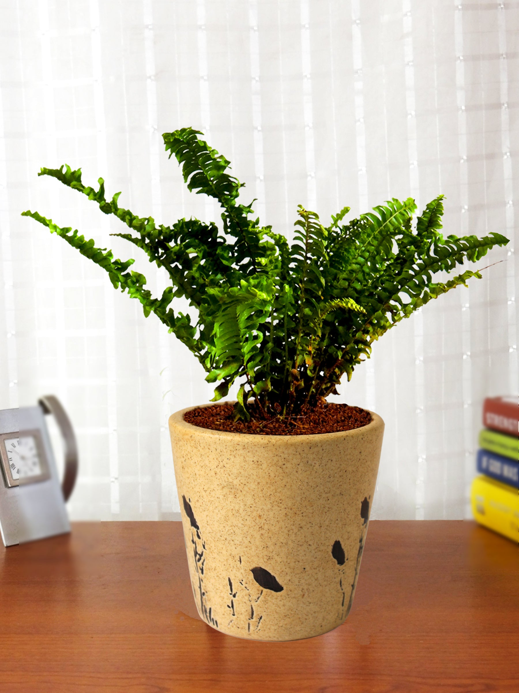 Air Purifying Live Green Fern Plant in Brown Bucket Aroez Ceramic Pot
