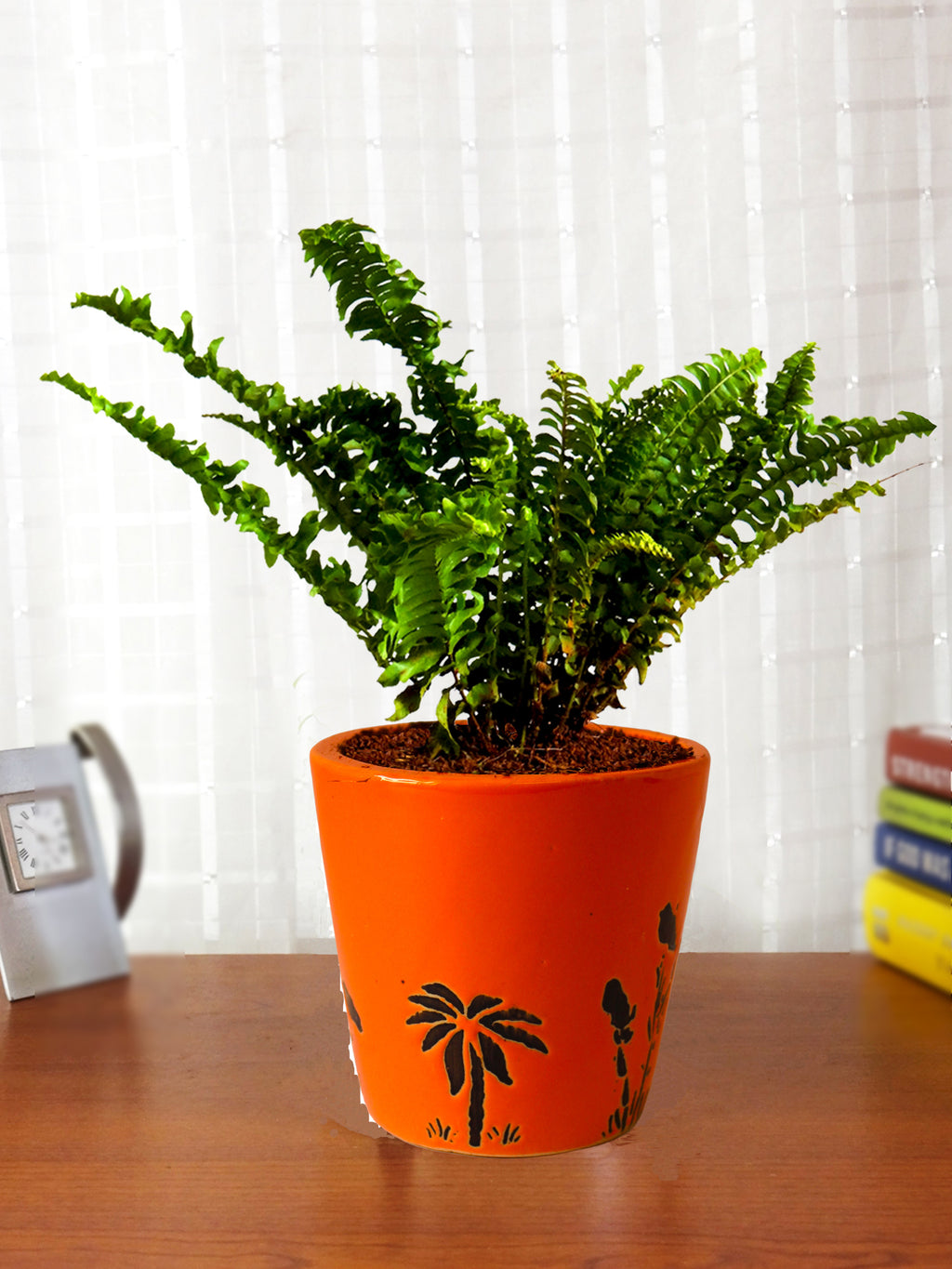 Air Purifying Live Green Fern Plant in Orange Bucket Aroez Ceramic Pot