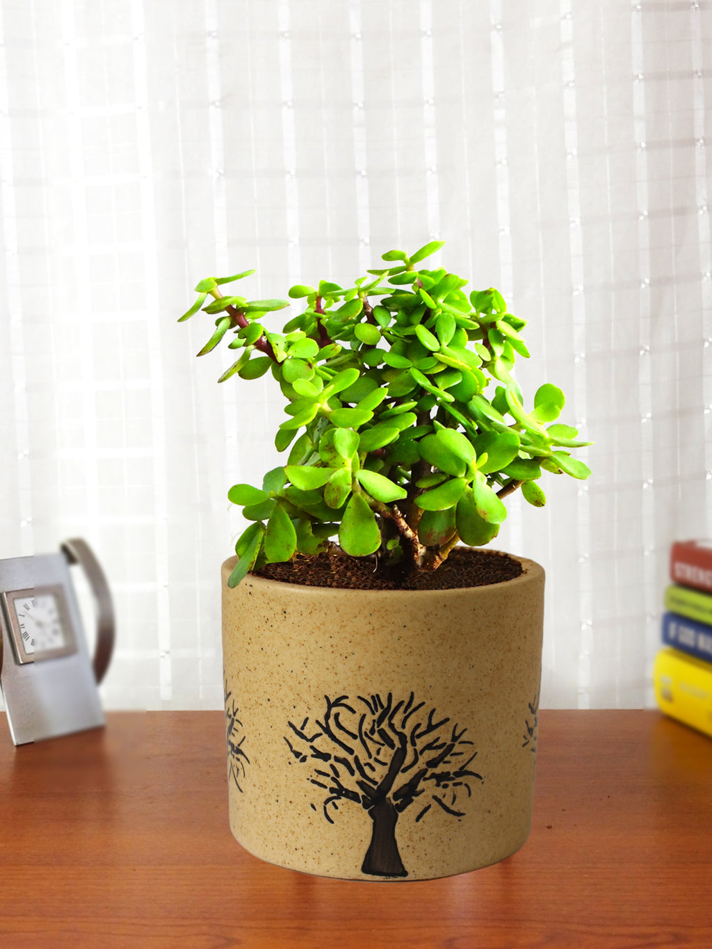 Good Luck Jade Plant in Brown Barrel Aroez Ceramic Pot