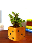 Good Luck Jade Plant in Yellow Dice Ceramic Pot