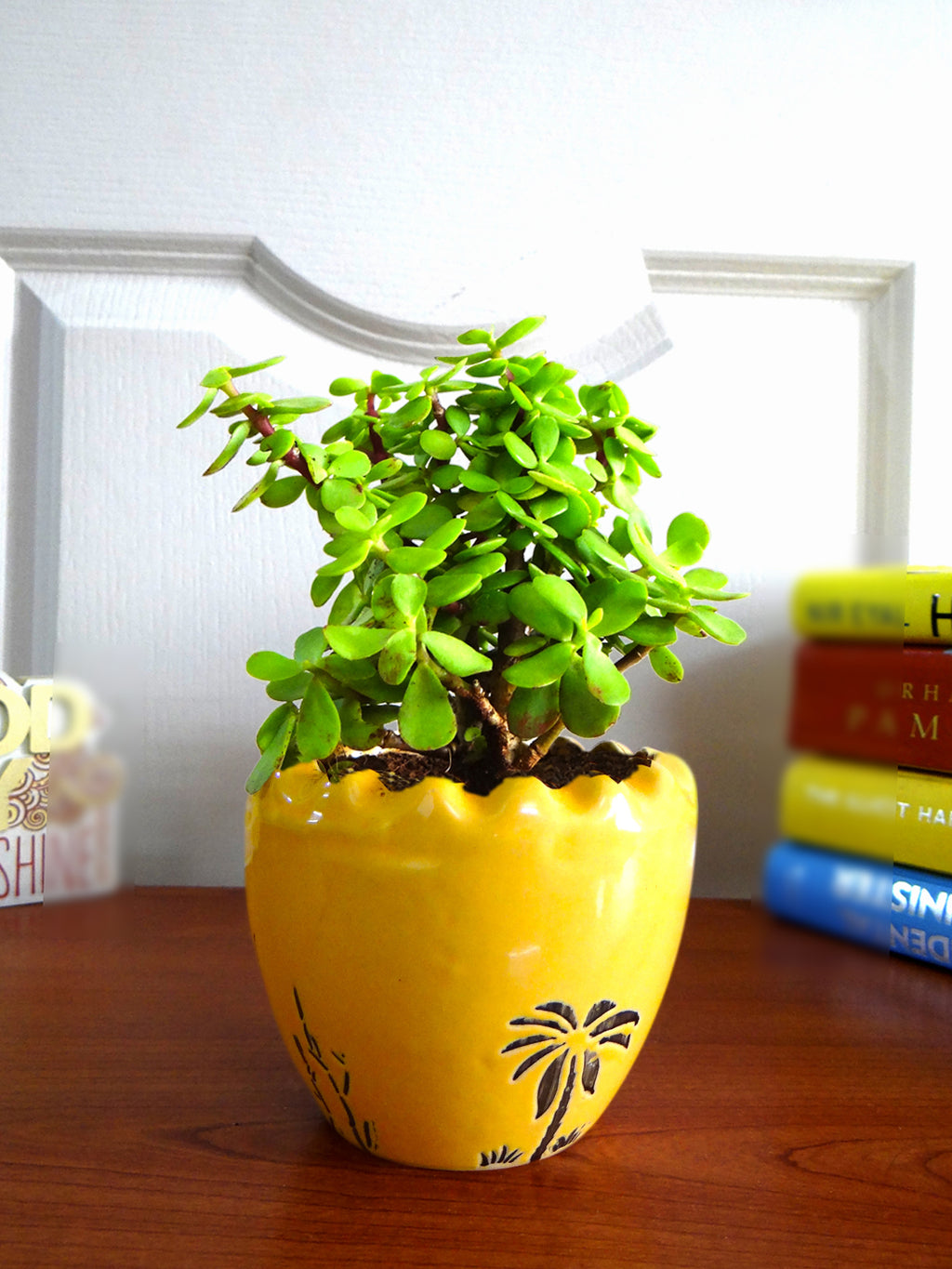 Good Luck Jade Plant in Yellow Ruffel Aroez Ceramic Pot