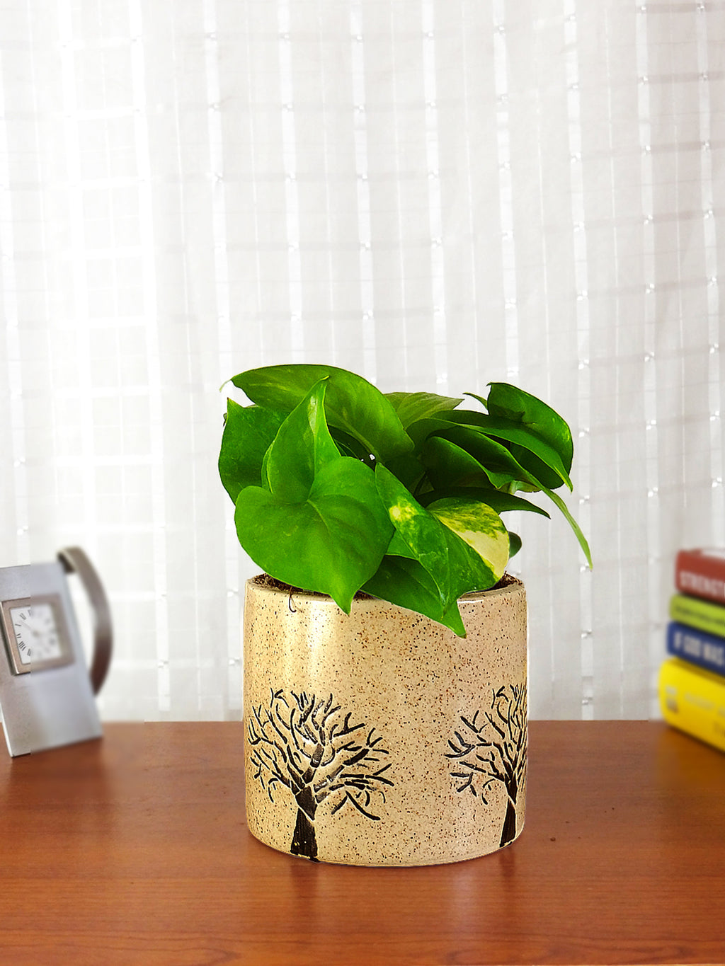 Good Luck Money Plant in Brown Barrel Aroez Ceramic Pot
