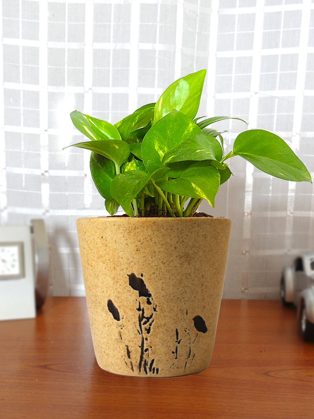 Good Luck Money Plant in Brown Bucket Aroez Ceramic Pot