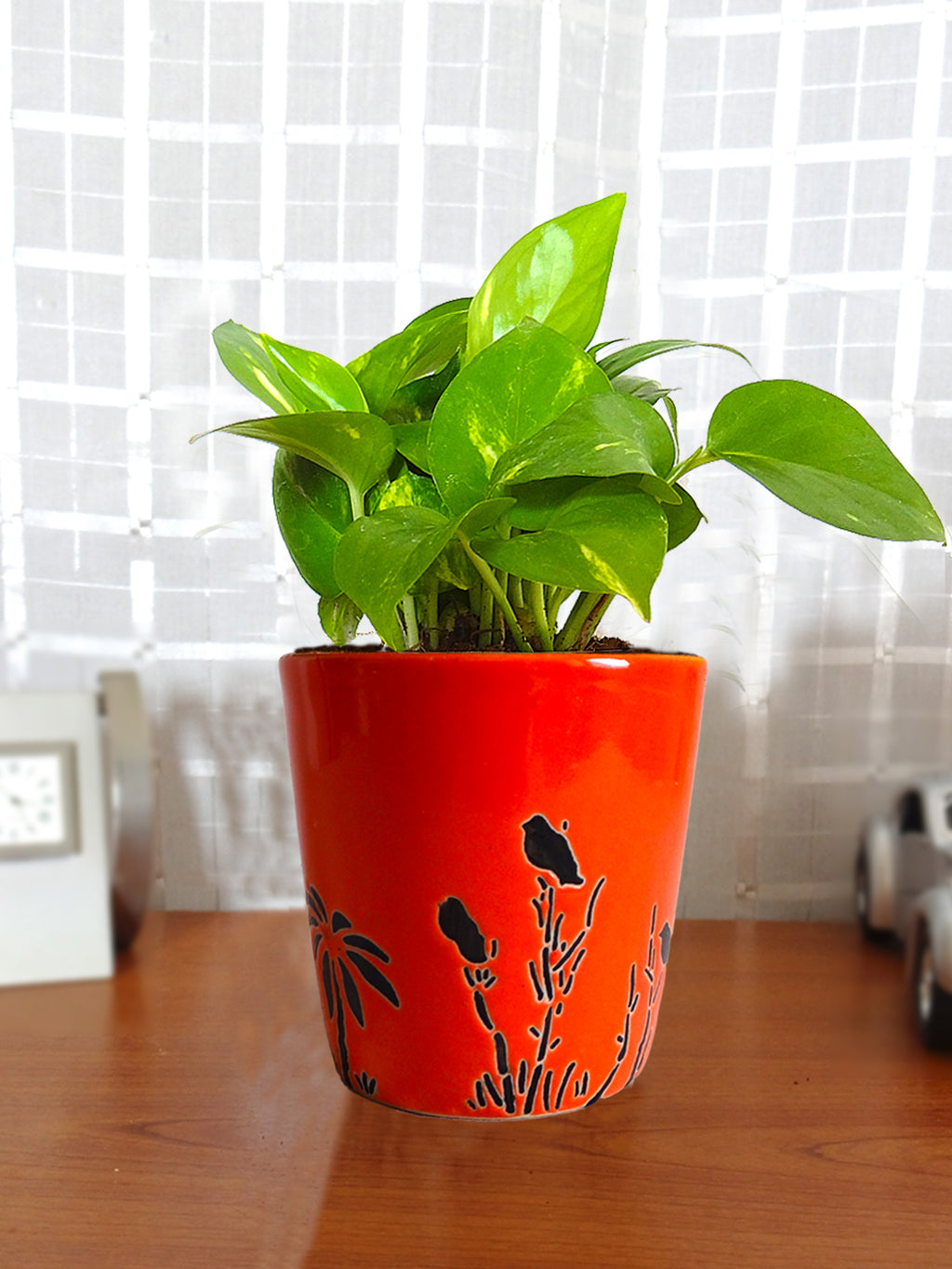 Good Luck Money Plant in Orange Bucket Aroez Ceramic Pot