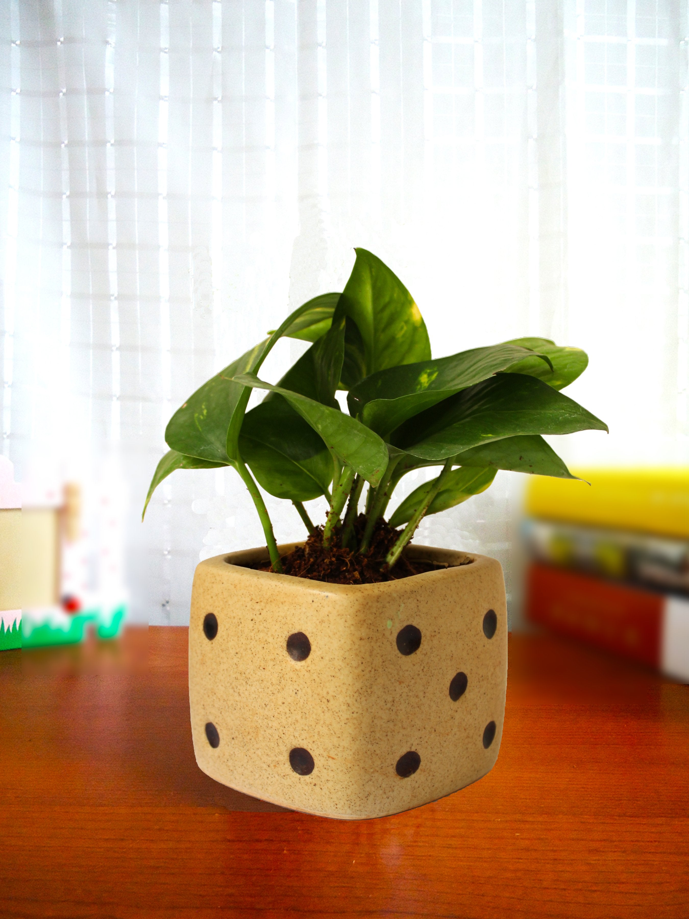 Good Luck Air Purifying Money Plant in Brown Dice Ceramic Pot