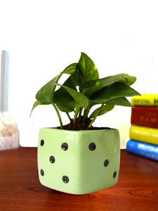 Good Luck Air Purifying Money Plant in Green Dice Ceramic Pot
