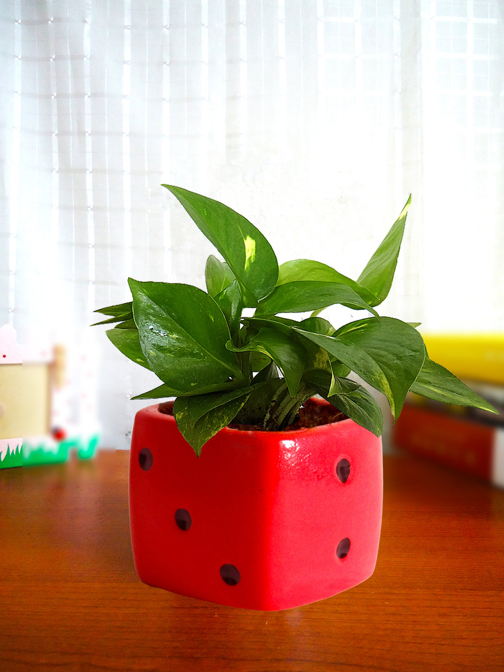 Good Luck Air Purifying Money Plant in Red Dice Ceramic Pot
